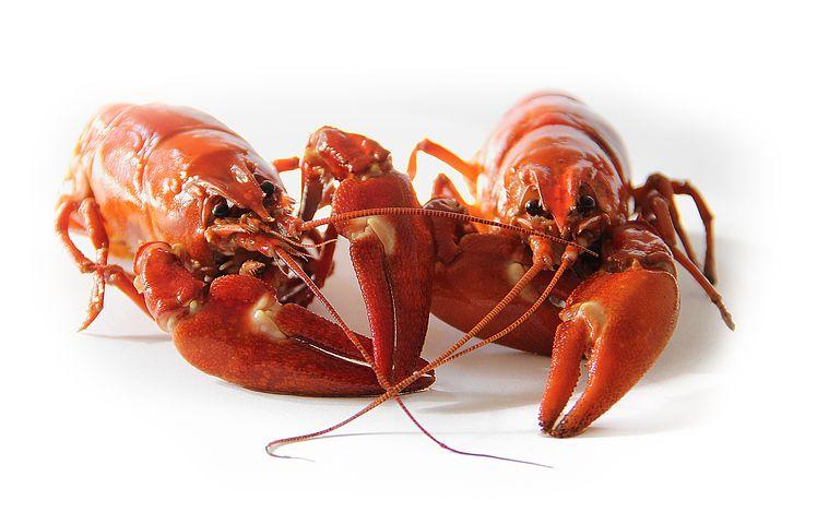 crayfish 9